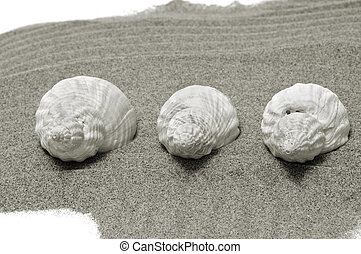 seashells - a pile of seashells on the sand in black and...