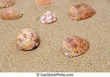 seashells - a pile of seashells on the sand