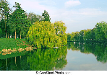Willow trees.  Nature