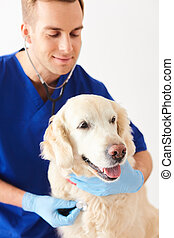 Skillful young vet is analyzing animal health