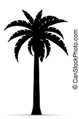 palm tree black outline silhouette illustration isolated on...