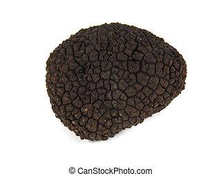 Perigord Summer Truffle - Perigord summer truffle Tuber...