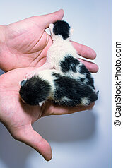 Two small kittens in the palm
