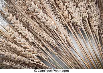 Heap of rye wheat ears on blue background directly above