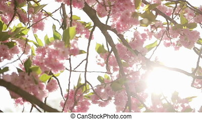 Defocused background of branches of a blossoming tree.