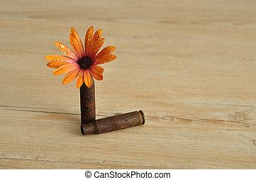 Daisy and bullets - An orange daisy displayed in a rusty...