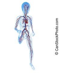 female jogger - 3d rendered illustration of female skeleton...