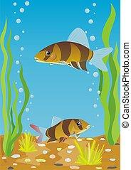 Aquarium fishes - A variety of aquarium fish. Aquarium...