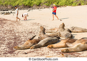 Sea Lions and the tourists in Galapagos Islands - Santa Fe...