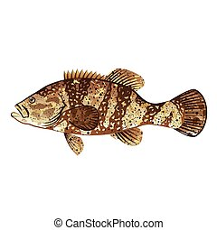 Goliath Grouper Gamefish ocean vector illustration