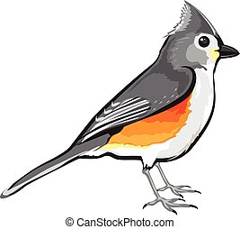 Tufted Titmouse Bird vector illustration clip-art graphic...