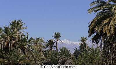 Snowy mountains behind palm trees