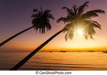 Coconut palms on the sandy beach of the tropical island. Koh Chang. Thailand.