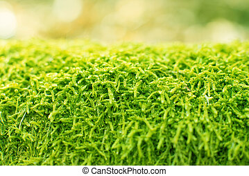 Green fern moss as a background