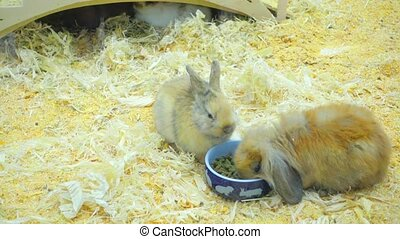 Small rabbits eat and have fun in the paddock