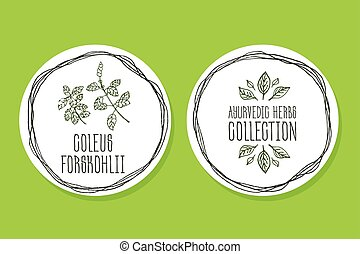 Ayurvedic Herb - Product Label with Coleus forskohlii -...