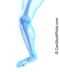 knee illustration - 3d rendered illustration of a healthy...