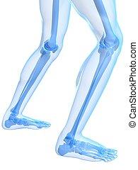 knee illustration - 3d rendered illustration of healthy...