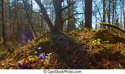 Spring forest and flowers, time-lapse with crane