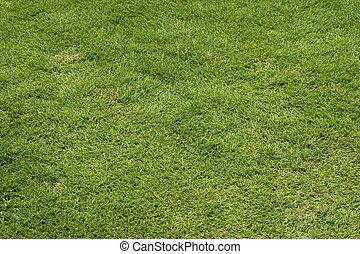 Green Grass Background - Green grass backdrop