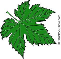 fig leaf - vector,green fig leaf,illustration,garden,