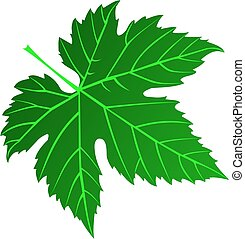 fig leaf - vector,green fig leaf,illustration,