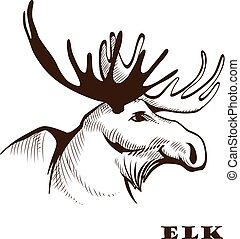Moose or Eurasian elk. - Vector illustration hand drawn elk...