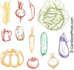 Autumnal ripe vegetables sketch icons