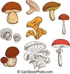 Ripe fresh mushrooms sketch symbols - Ripe fresh king bolete...