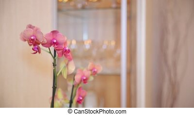 Pink orchid with yellow elements. Close up - Bud of a...