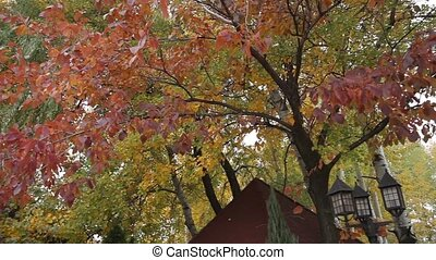 Trees in the area. Luxury cottage - Beautiful trees in the...