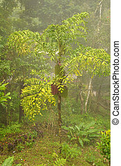 Fishtail Palm Caryota mitis - Growing in this jungle like...