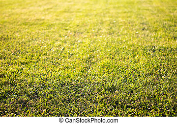green cutted grass background on golf field, natural image...