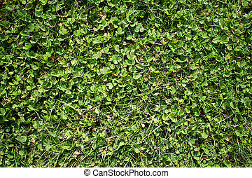 Green grass background - The green grass background texture