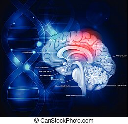 Human brain abstract scientific design with DNA chain,...