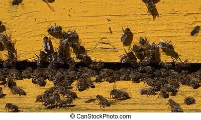close up of honeybee fly wooden vintage hive at summer time. 4K