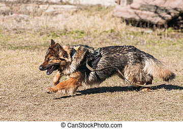 Fast Running German Shepherd Dog Training Running Dog...