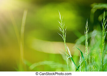 spring grass on Riverside with shallow focus