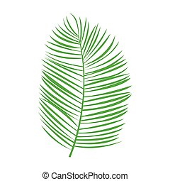 Vector green palm leaf on white background