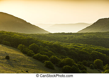 green forest covered mountains with yellow fog