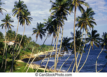 SRI LANKA HIKKADUWA BEACH - a beach at the coast of Hikaduwa...