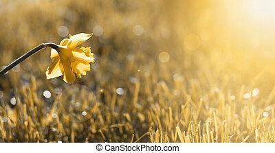 Golden flower banner