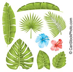 Set of Tropical Leaves, Collection Plants Isolated