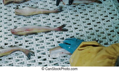 Factory for processing of fish and seafood - Factory for...