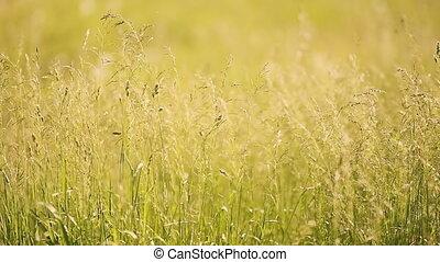 Grass sways. Green tall grass.