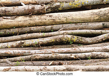 Old Wood Stack With Trunks - Old Wood stack with trunks, Can...