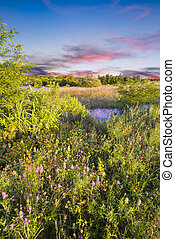 Texas Wildflowers at Sunrise - Colorful Texas wildflowers in...