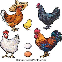 Set of different chickens, vector sketch hand-drawn...