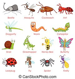 Different variety of insects