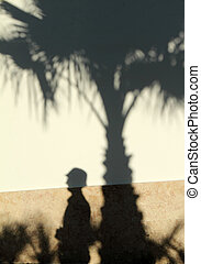 silhouette of tourist and palm tree - shadow of palm tree...